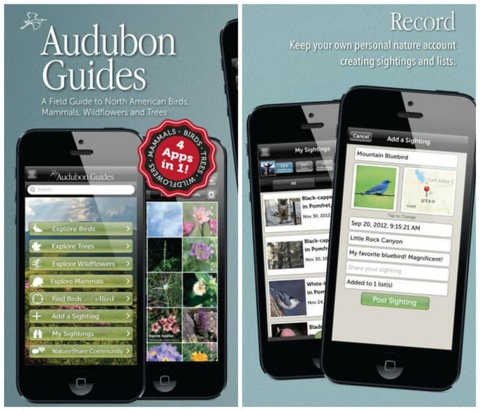 amantes da natureza audubon field guides