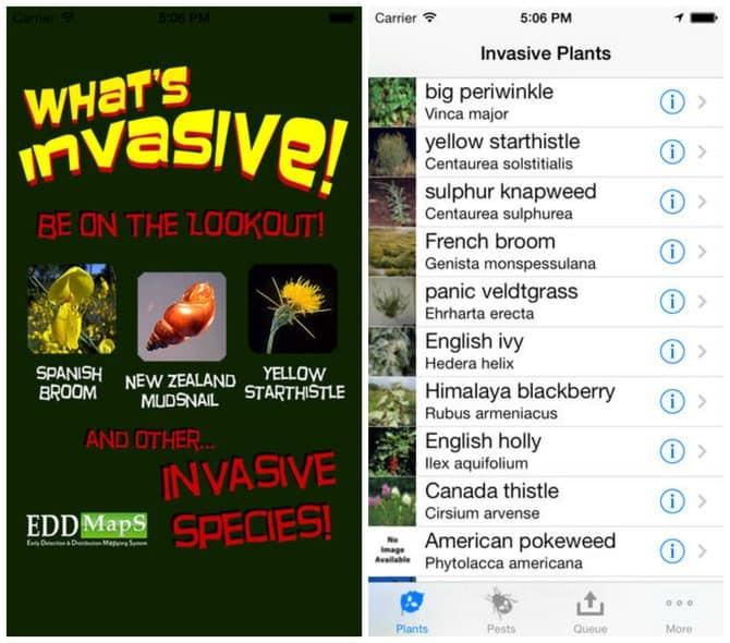 4. What's Invasive!