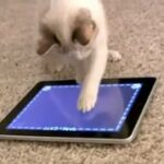 app for cats