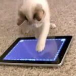 aplicativos de animais app for cats