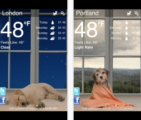 donos de cachorros Weather Puppy