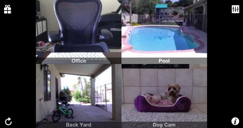 iCam aplicativo para cachorros