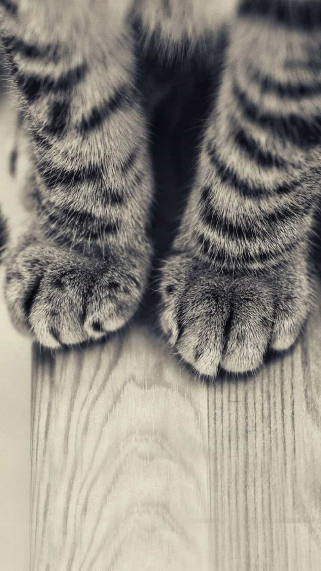 gray-striped-kitten-legs-cat-android-wallpaper