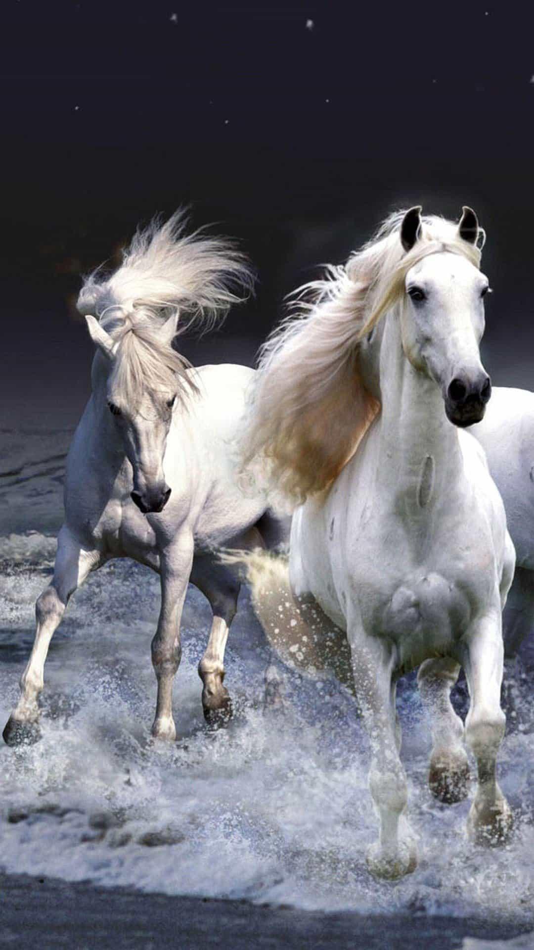 iphone-7-cavalos