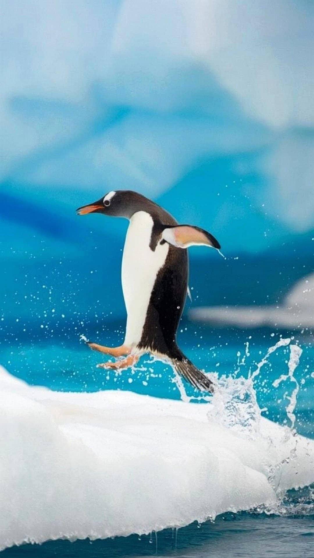 wallpaper-iphone-7-pinguin
