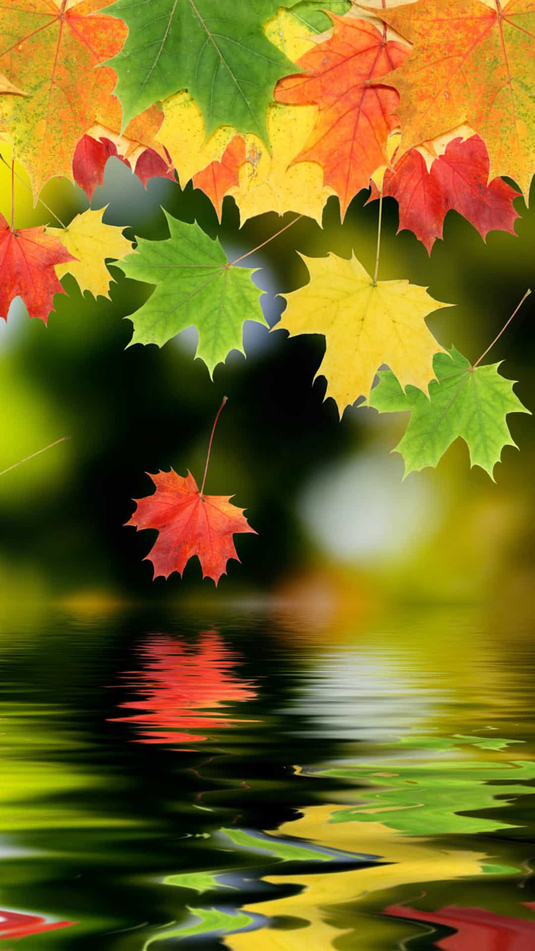 Autumn Maple Leafs Android Wallpaper