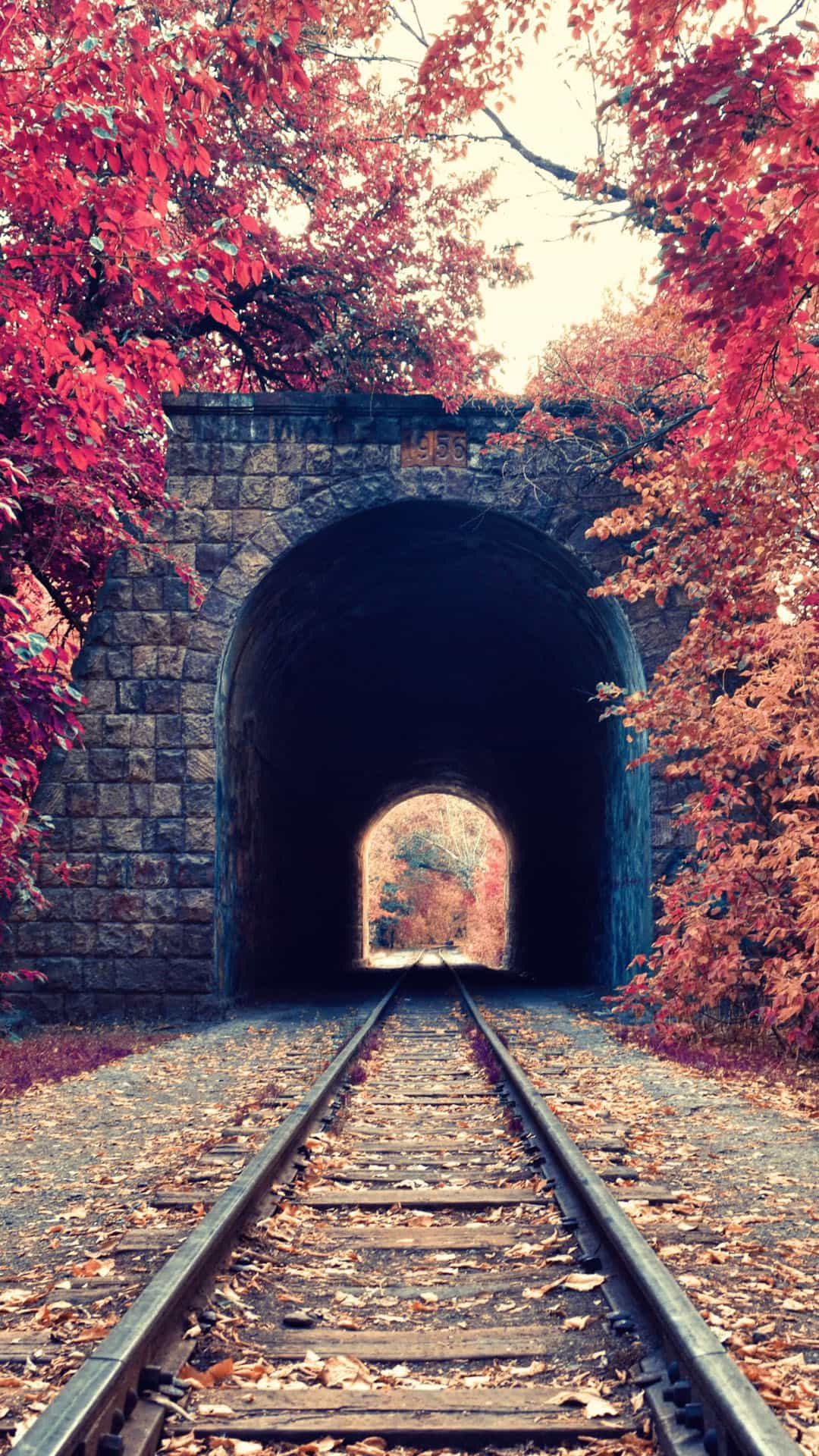 Autumn Train Tunnel Red Leaves Android Wallpaper