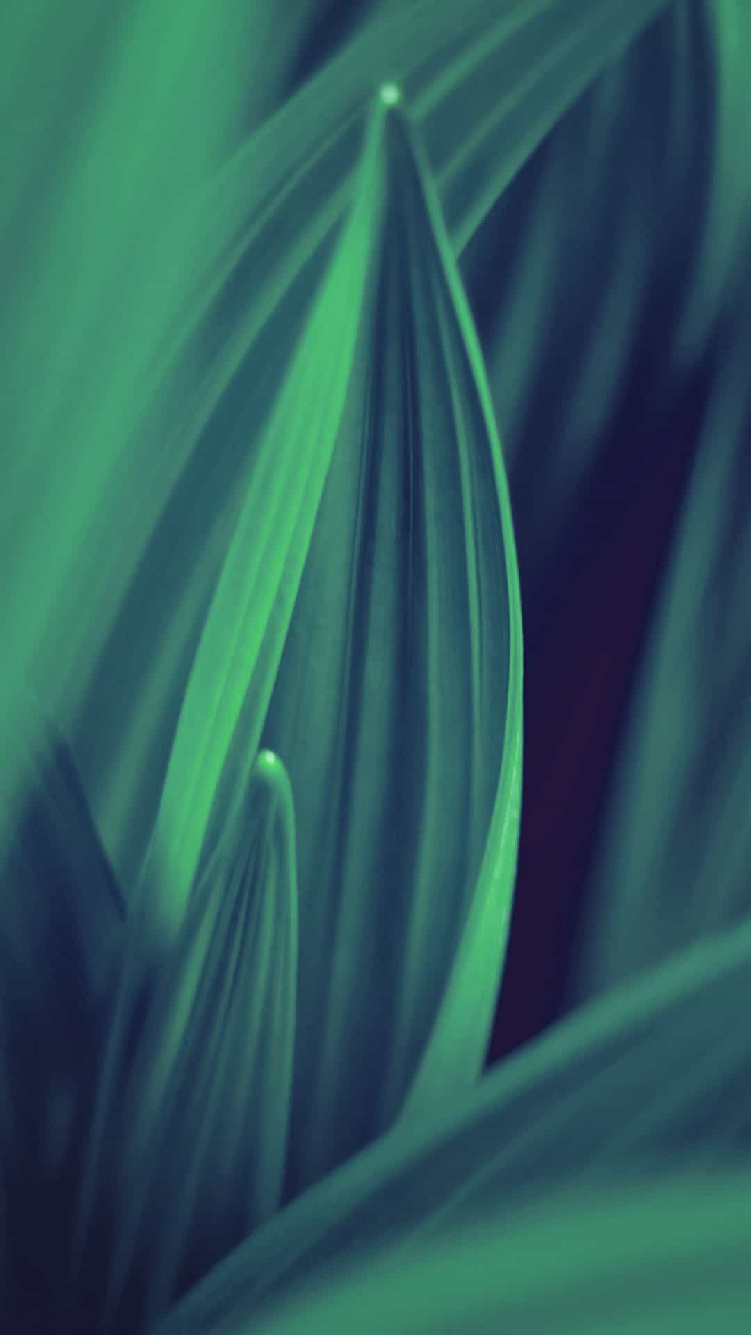 Green Leaf Lines Android Wallpaper