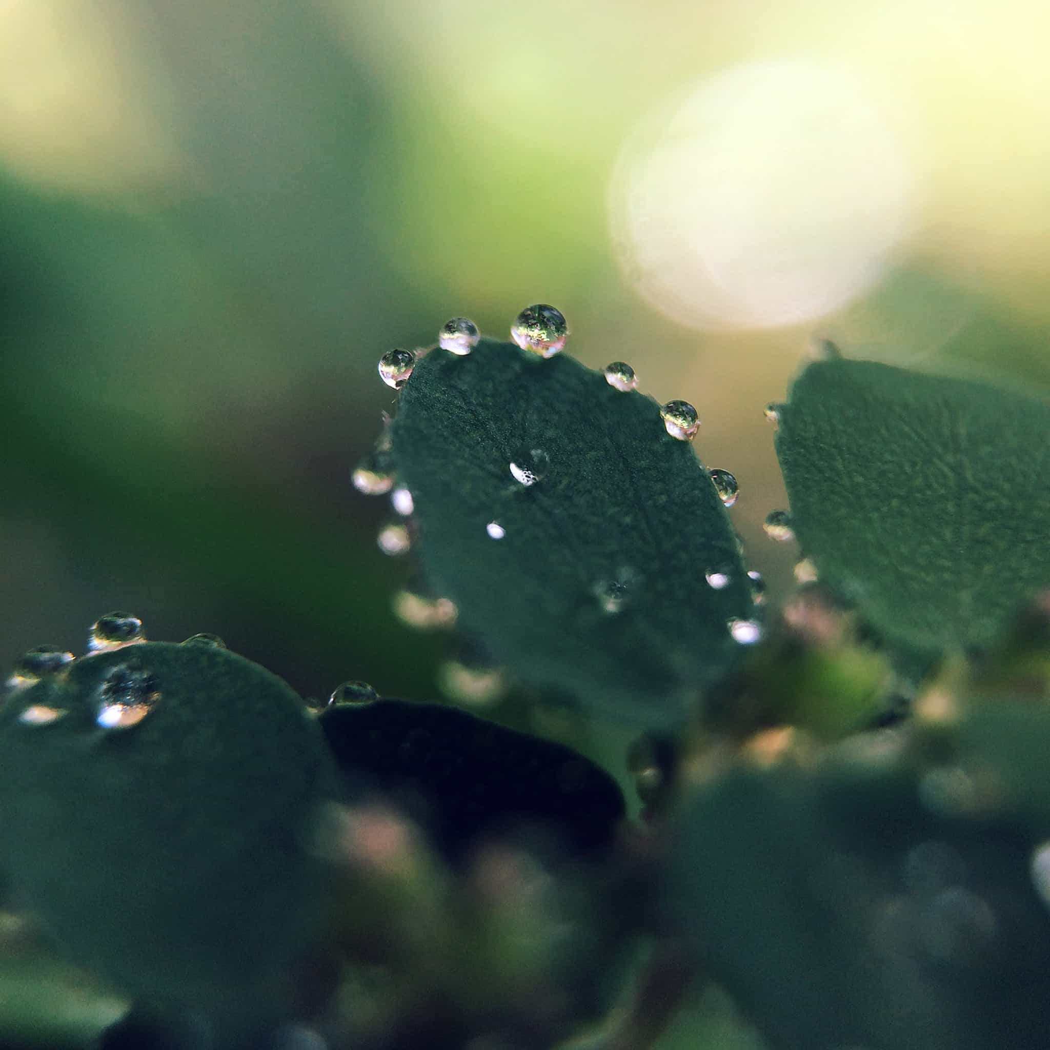 Papers.co-mv14-nature-morning-dew-leaf-flower-rain-green-android-medium