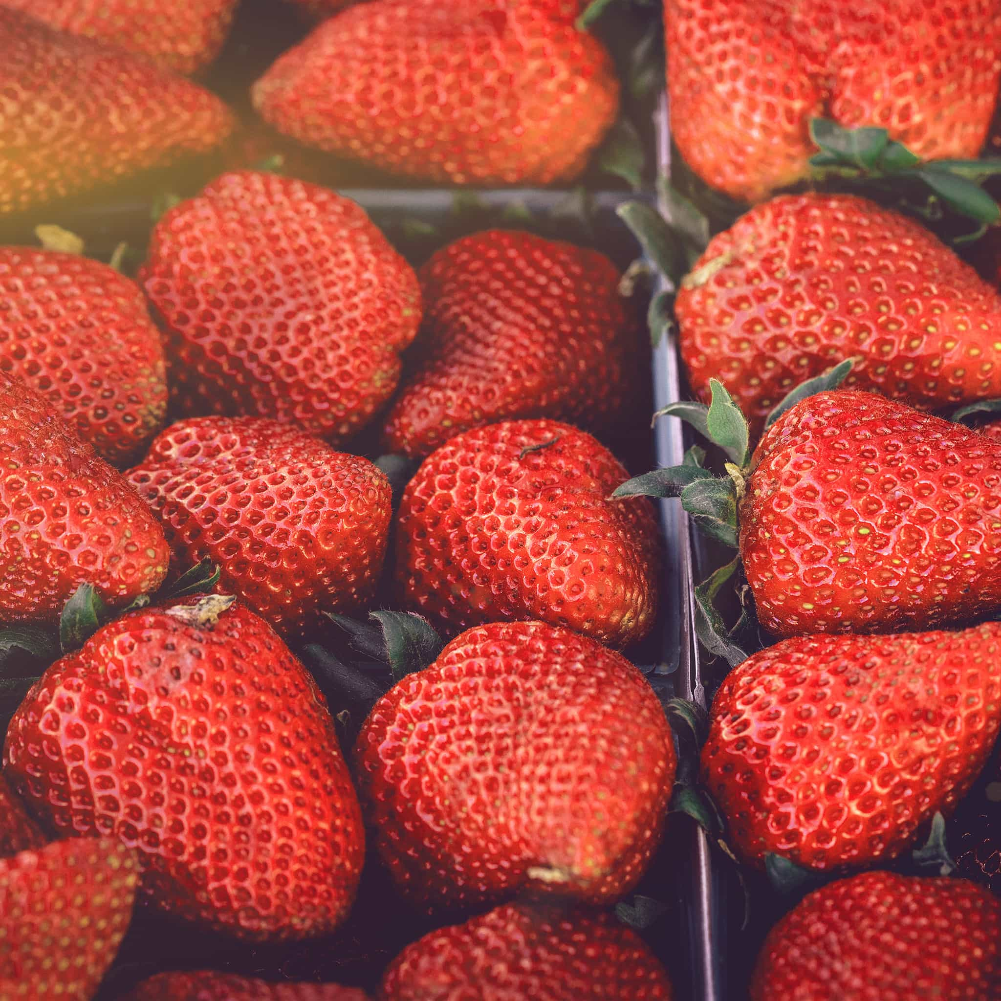 Papers.co-nc19-strawberry-red-fruit-nature-spring-flare-delicious-android-medium