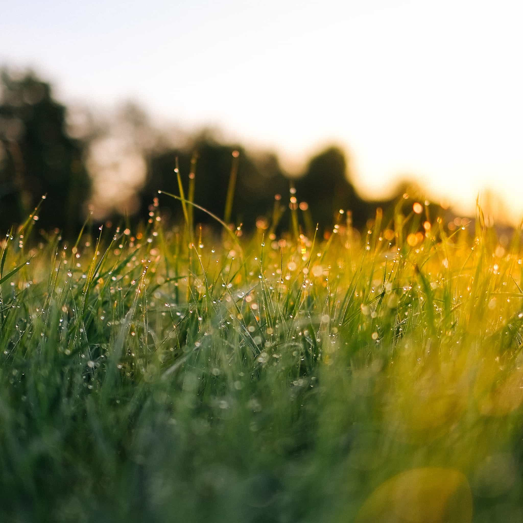 Papers.co-nm66-lawn-green-nature-sunset-light-bokeh-spring-android-medium