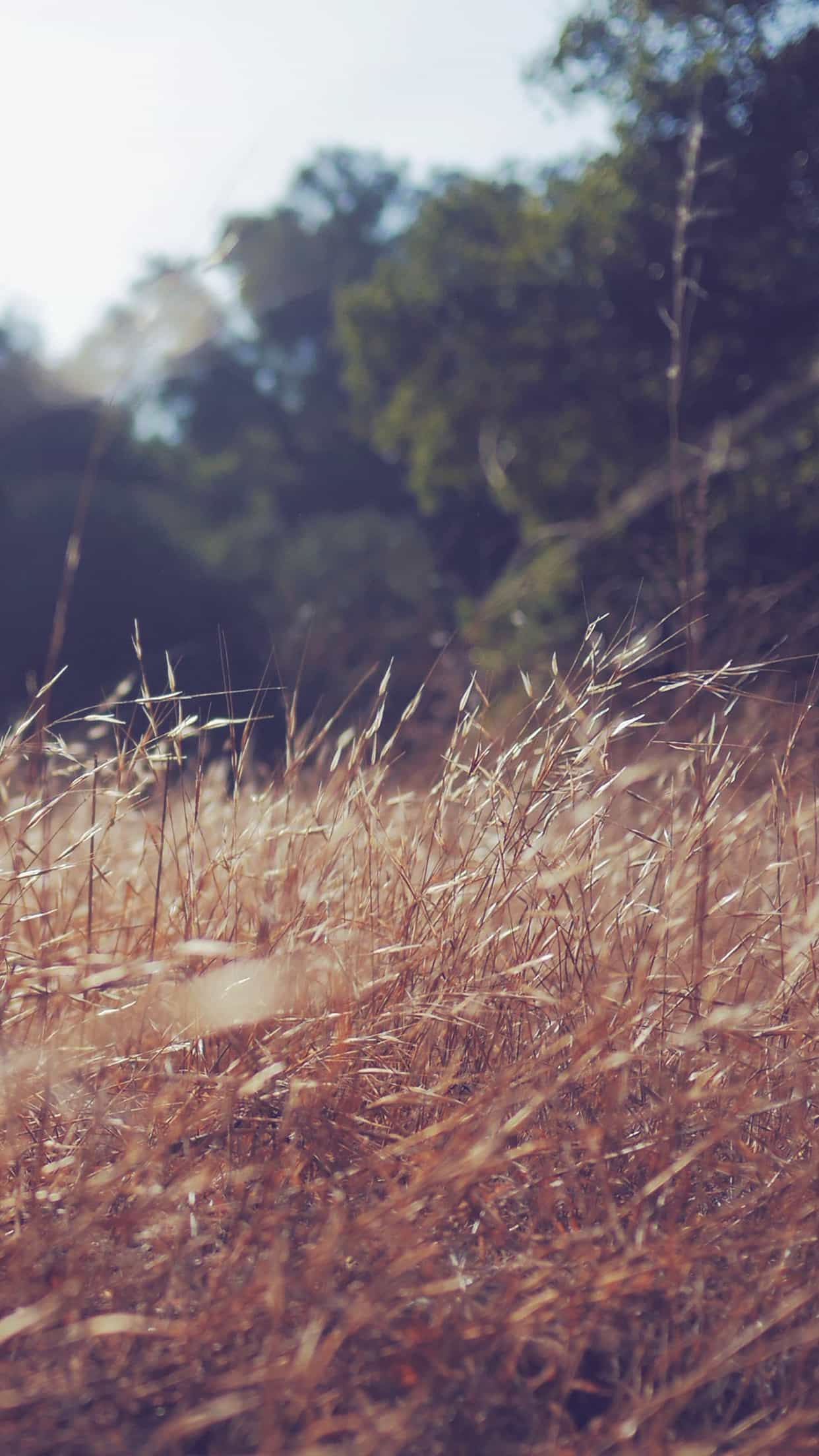 Rye Grass Field Vintage Android Wallpaper