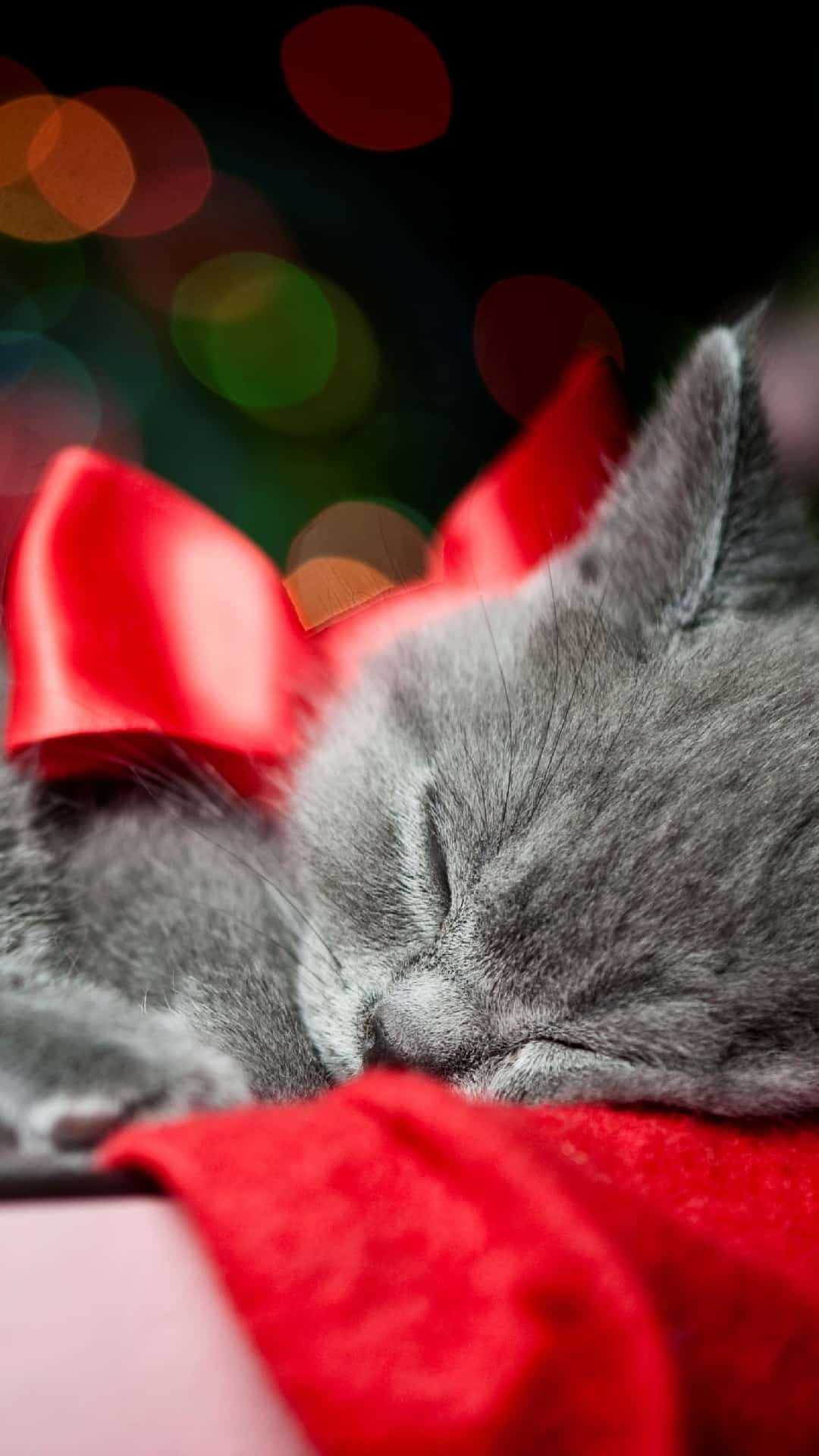 Grey Kitten Red Ribbon Christmas Present Bokeh Android Wallpaper