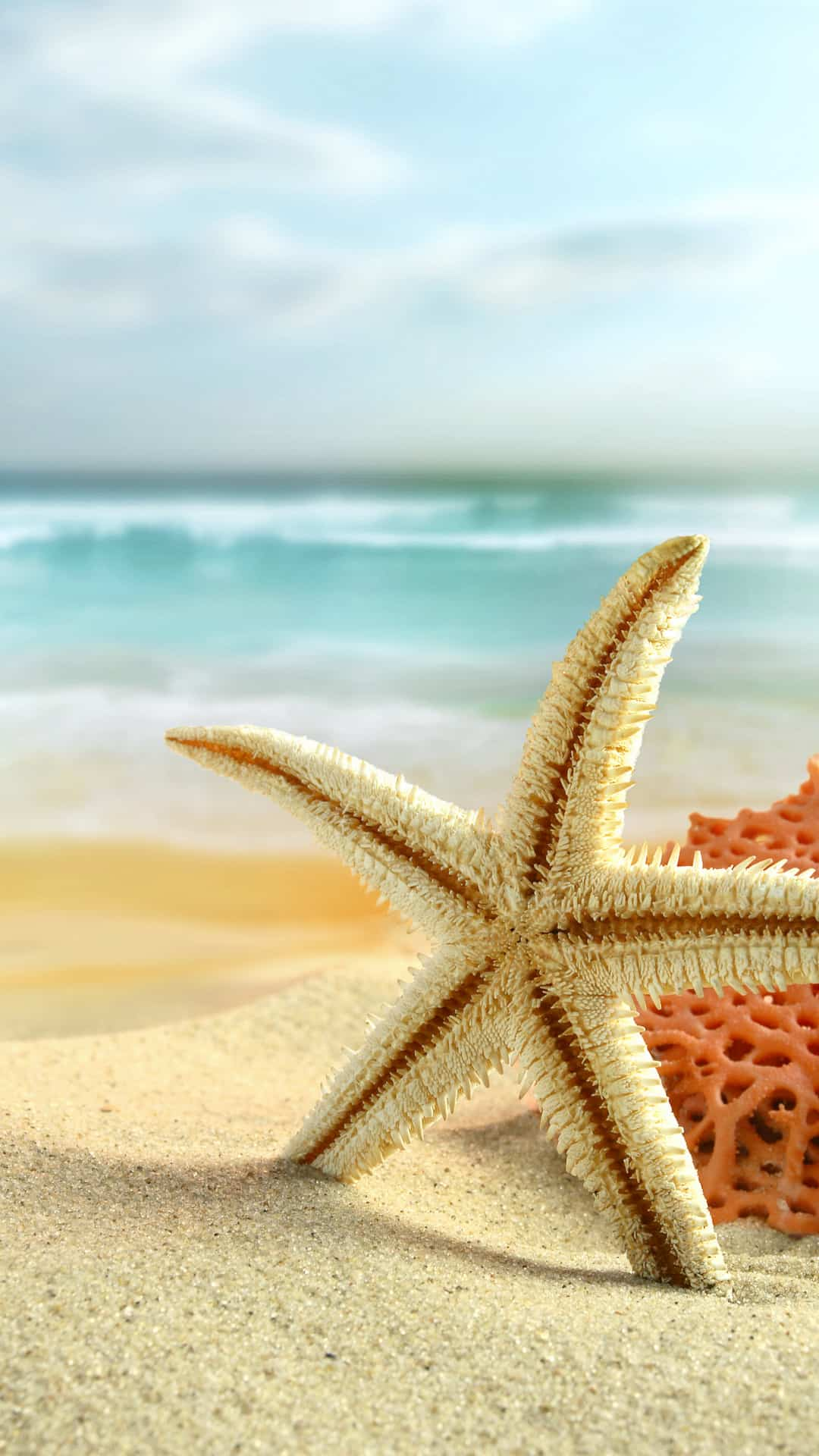 Sea Star Summer Beach Android Wallpaper