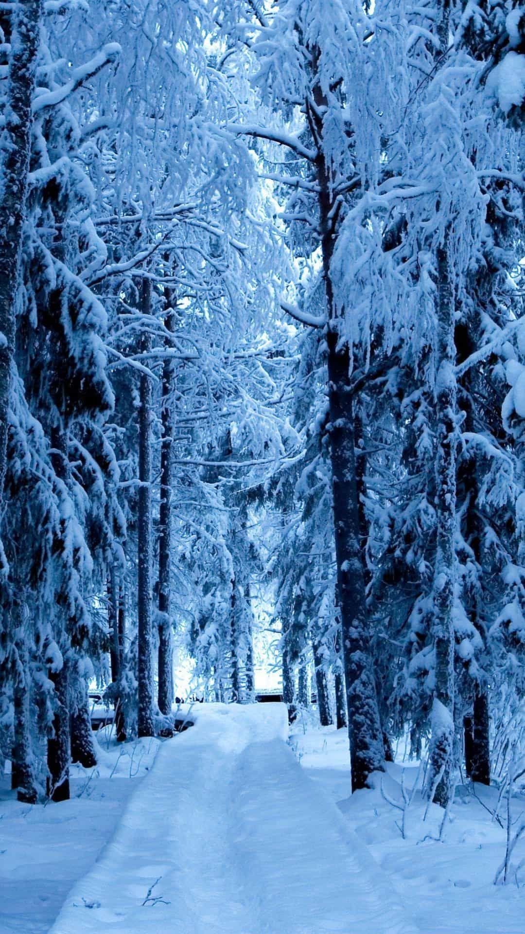 Snow Forest Blue Ice Android Wallpaper