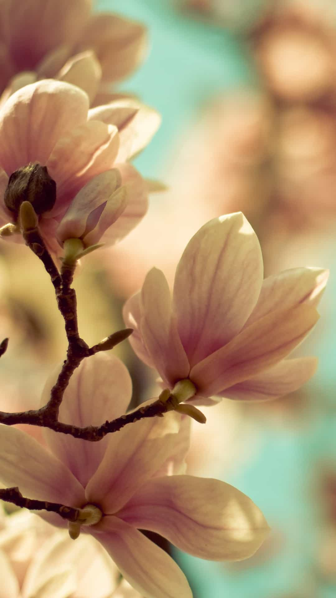 Spring Flowers Blossom Samsung Android Wallpaper