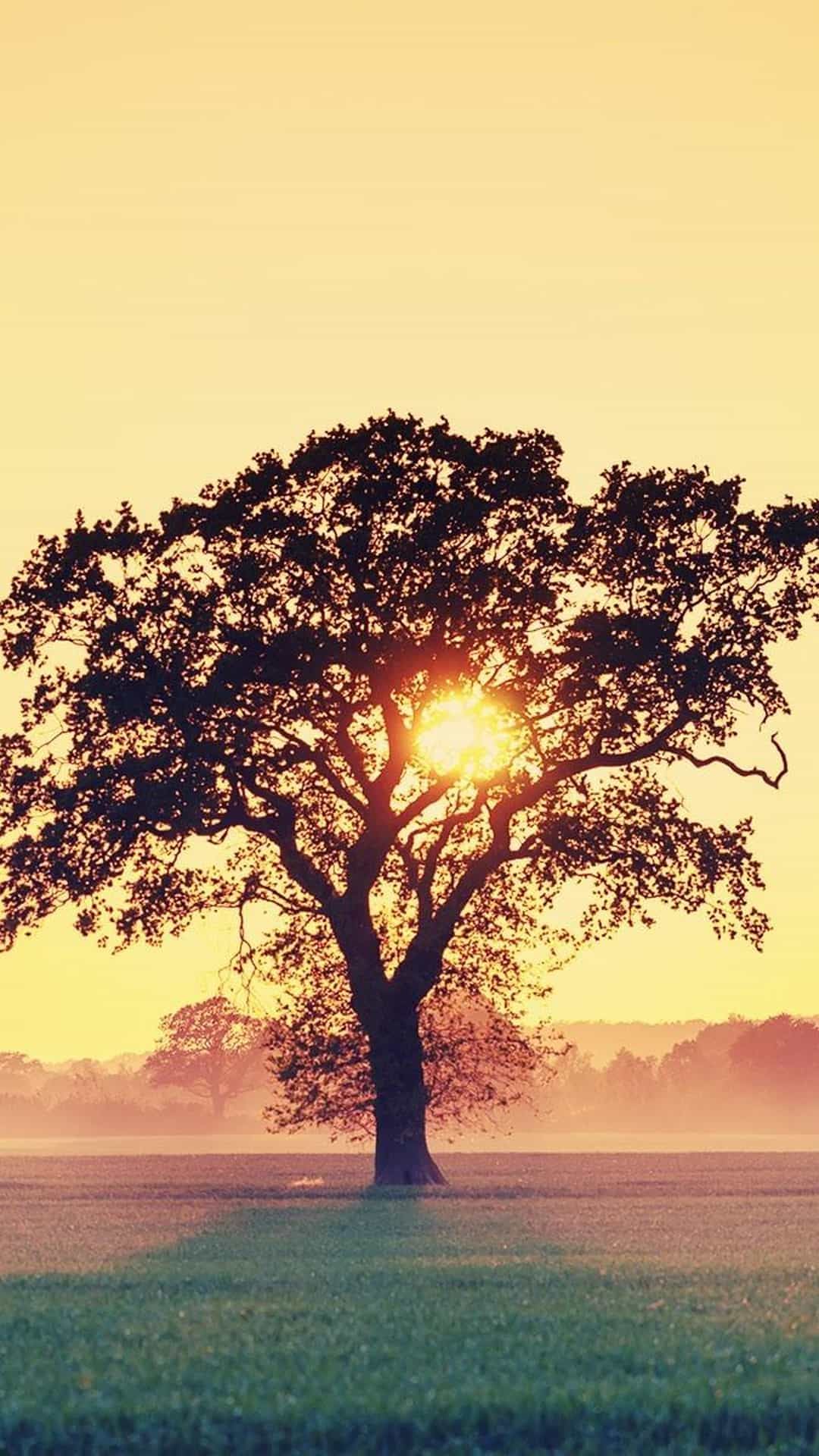 Sunset Tree Branches Android Wallpaper