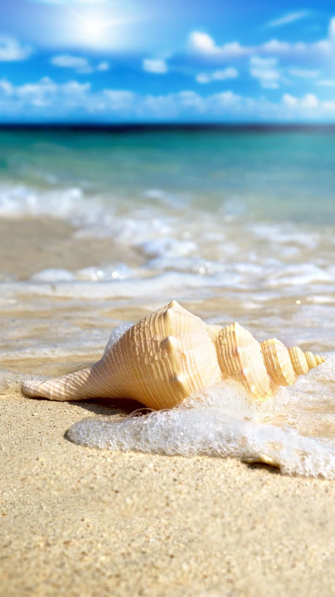 White Seashell In Waves Android Wallpaper