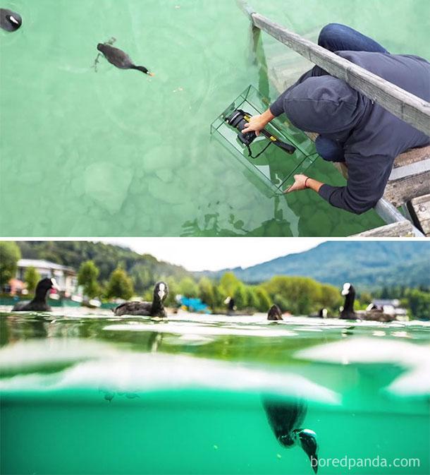 tirar-fotos-profissionais-aquario