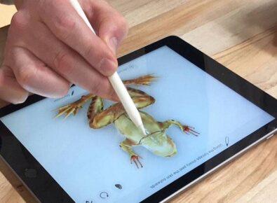 evitar o apple pencil razões capa