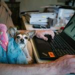 Como ganhar renda extra online: 16 formas