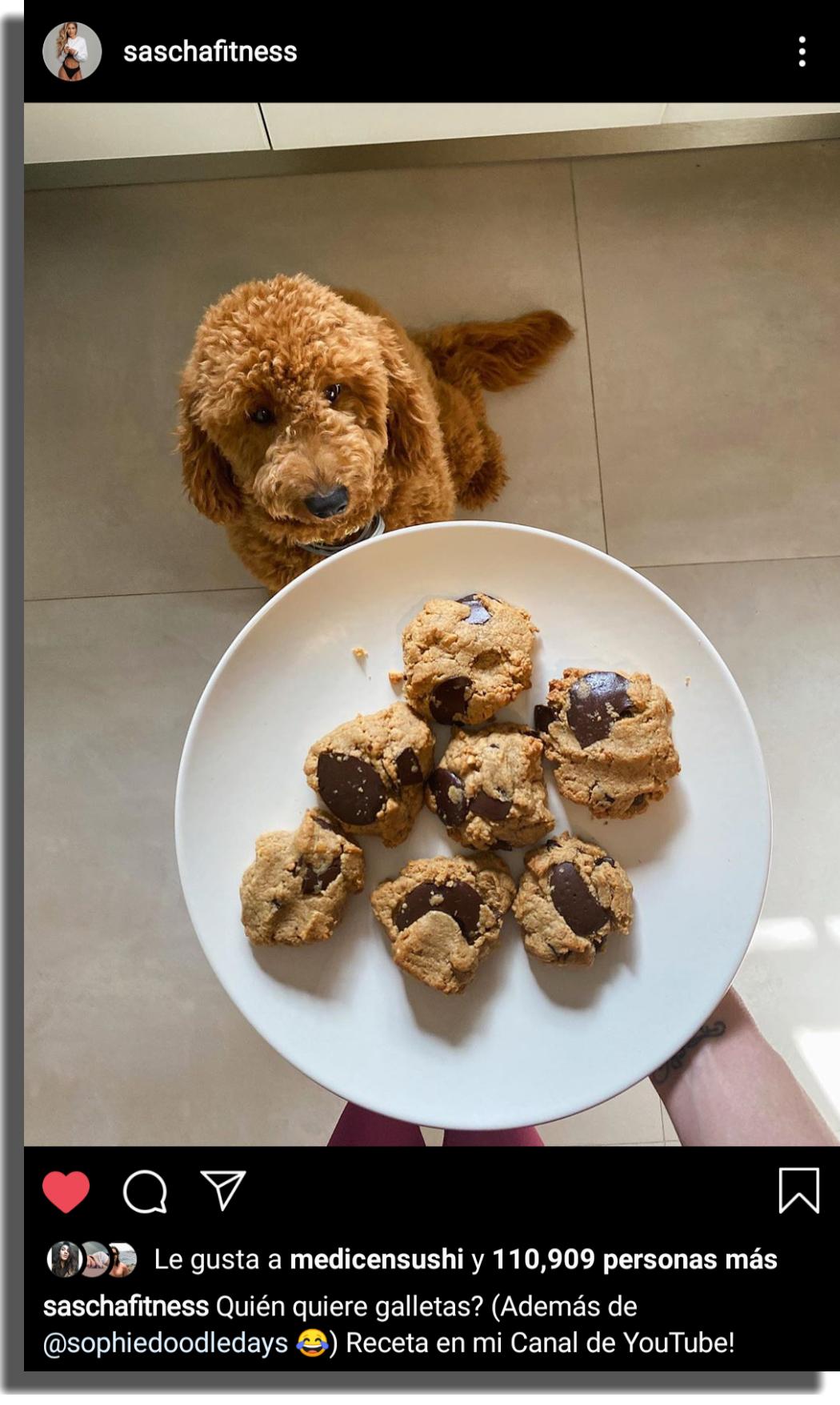 ideas de contenido para Instagram animales y mascotas