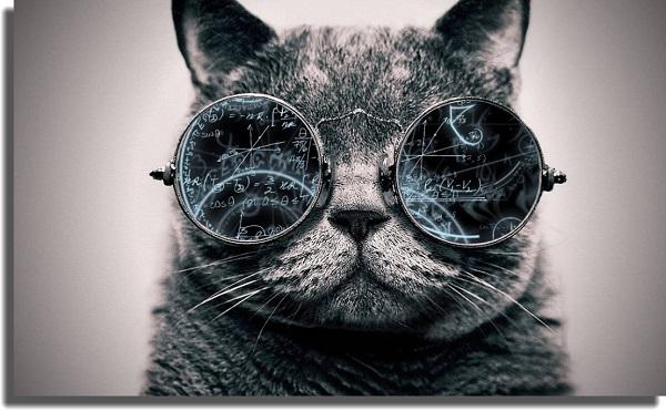 Cat best Windows 10 wallpapers