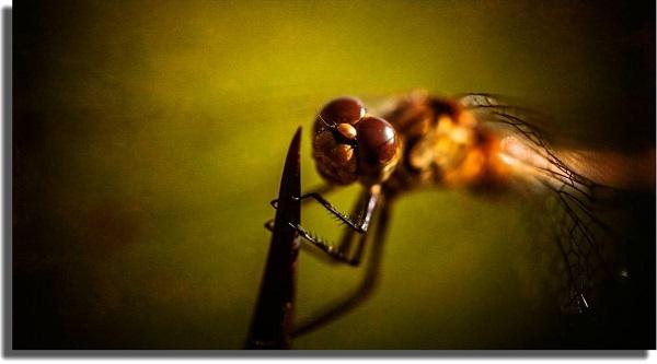 fondo de pantalla insecto