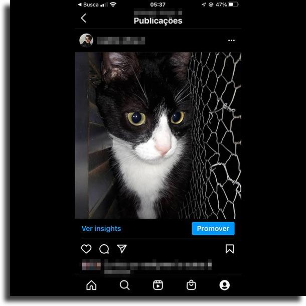 Animais e bichos de estimação posts para bombar seu Instagram